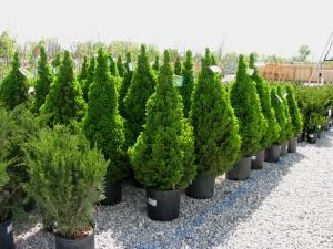 shrubbery