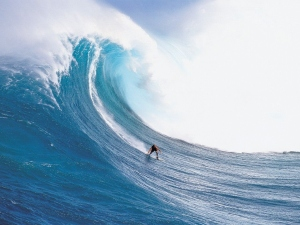 Surfing the ocean of life