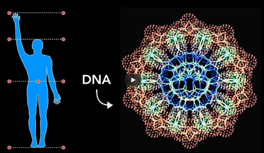 DNA and the Human