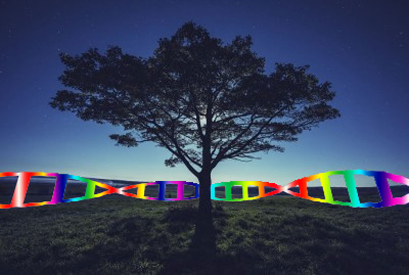 Tree of life with rainbow DNA